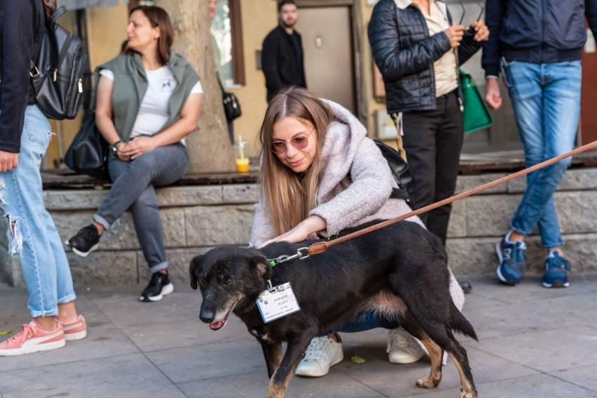 """Кученцата от общинския приют отново ще бъдат в """"Капана"""" тази неделя"""